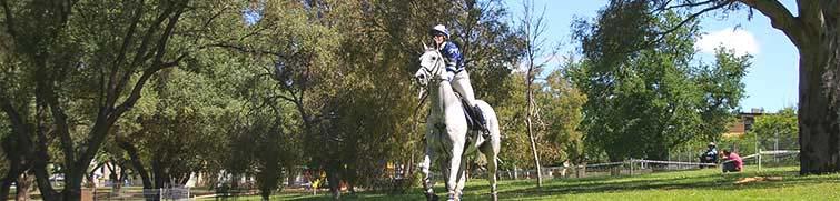 Peak Horse