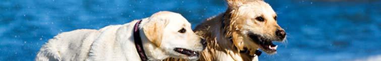 Hundefoder storkøb
