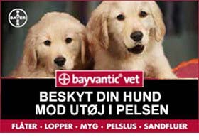 bayvantic3